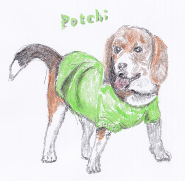 Potchi